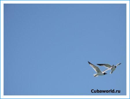 Фотографии Кубы от Буравлева Виталия часть 1 ( 10 фото )